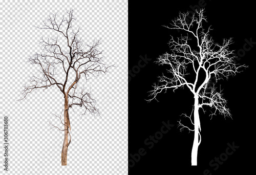Valokuva isolated death tree on transperrent picture background