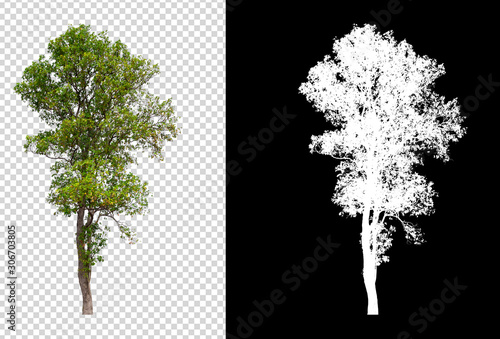 isolated tree on transperret picture background with clipping path
