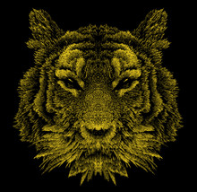 Graphic, Hand-drawn Portrait Of A Tiger On A Black Background
