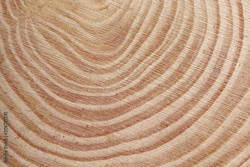 Cross section of tree trunk background and texture Slika na platnu