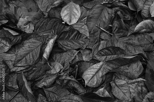 Foto auf Leinwand Darknightsky Herbst Blatt Textur