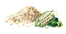 Sesame Green Pods With Seed. W...