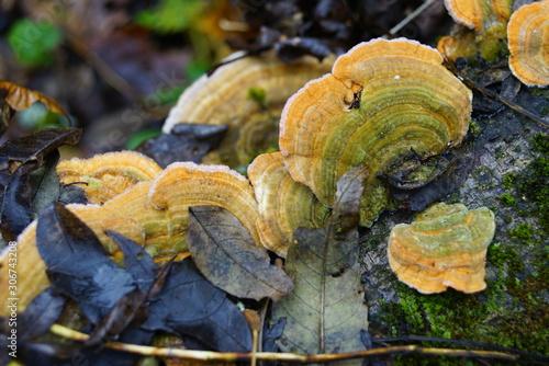 Foto auf Leinwand Darknightsky Zunder Baum Pilz