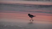 A Bird On The Seashore