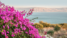 Floral Background Of Bougainvi...