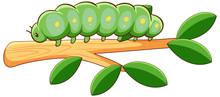 Fat Caterpillar On White Backg...