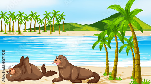 Foto auf Leinwand Kinder Scene with two seals on the beach