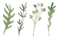 Fines Herbes. Traditional Fren...