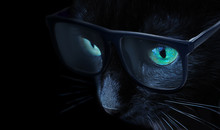 Smart Black Cat With Green Eyes Side View Wearing Sunglasses On Black Background Close Up, Macro