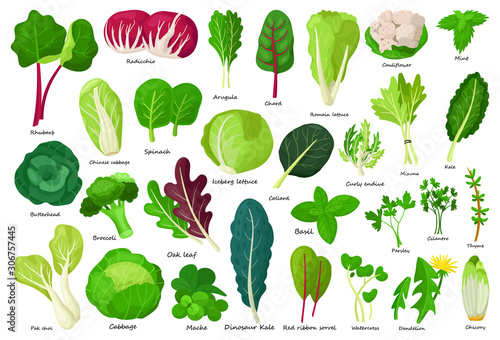Vegetable lettuce cartoon vector icon Fototapeta
