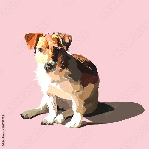 Fotobehang Honden Portrait of a dog Jack Russell Terrier. The dog is sitting on a light background.