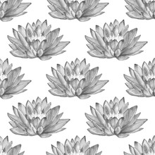 Watercolor Seamless Pattern With Black And White Lotus Flowers Isolated On White Background. Hand Painted Illustration.
