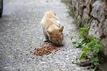 Cats Abandoned Street