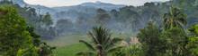 Mist Rainforest Jungle Background