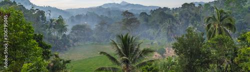 Photo mist rainforest Jungle background