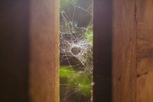 Spider Web In Sunlights On Woo...