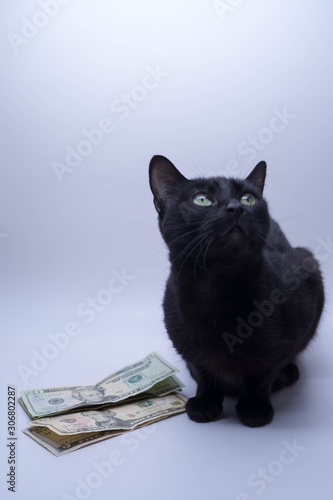 lucky black cat looking up into the white copy space money concept