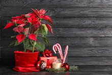 Christmas Plant Poinsettia With Decor And Gift On Dark Wooden Background
