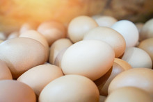 Heap Of Egg Food In The Farm Chicken / Close Up  Eggs In Basket , Selective Focus