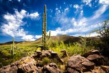 Saguaro Cactus And Rocky, Bloo...