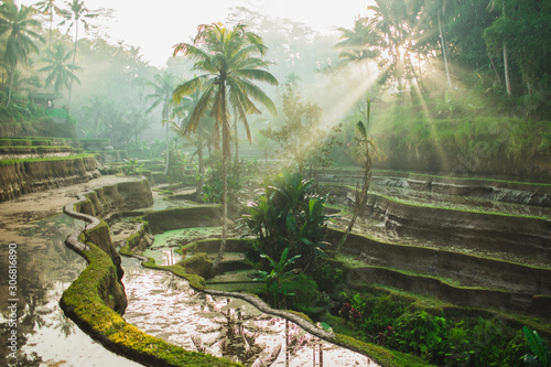 Fototapeta Beautiful sunrise over famous balinese landmark Tegalalang rice terraces. Magic sun rays, amazing light. Welcome to Bali travel concept. obraz
