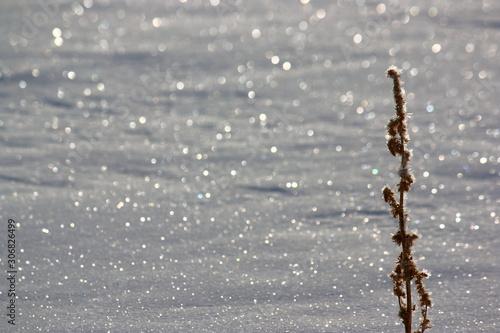 Fotografie, Obraz  氷点下の雪原の煌めき。氷を纏った枯草と太陽の光に輝く雪面。