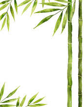 Watercolor Vector Bamboo Stem With Green Leaves And Copy Space.