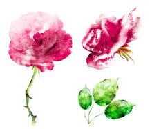 Watercolor Flowers And Leafs, Isolated On White Background