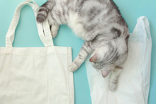 Cat With Tote Bag With Plastic...
