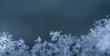 canvas print picture - viele verschiedene schneekristalle auf grau panorama