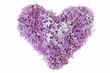 Lilac flowers heart isolated on white background. Love concept.Valentine's day concept