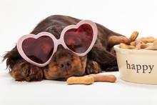 Cute Happy Puppy Dog Wearing H...