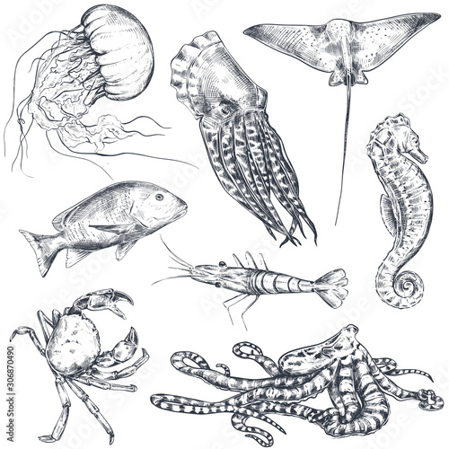Photo Vector collection of hand drawn ocean and sea animals in sketch style isolated on white