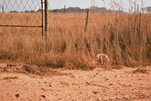 Dry And Dusty Grasslands And B...