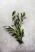 Bouquet Of Fresh Olive Tree Br...