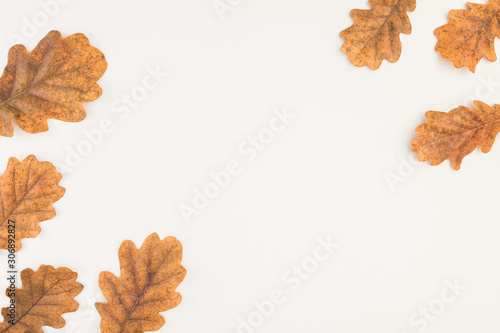 Autumn oak leaves on white background top view with copyspace