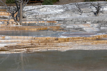 Dead Trees On The Travertine Terraces Of Mammoth Hot Springs In Yellowstone National Park