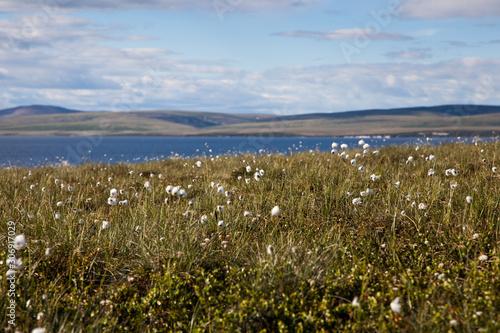 Voyage en Alaska lors de la période d'été Canvas-taulu