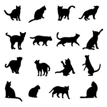 Isolated Cats On The White Bac...