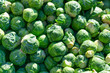 A Closeup Background of Green Brussels Sprouts