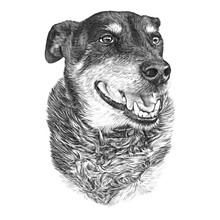 Portrait Of A Cute Dog Isolated On White Background. Hand Drawn Vintage Style Sketch Of A Dog With Smile. Animal Art Collection: Dogs. Realistic Illustration Of Pet. Design Template. Good For T Shirt