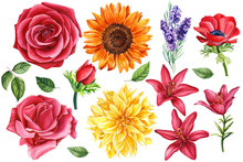 Set Of Sunflower, Lavender, Red Anemones, Lilies, Rose, Leaves, Dahlia,  Colorful Flowers On An Isolated White Background, Botanical Painting, Watercolor Illustration, Hand-drawing