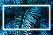 Toned Palm Leaves Abstract Bac...
