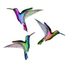 Hummingbirds Fly