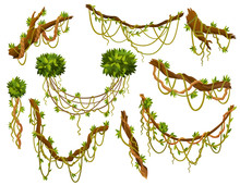 Liana Or Jungle Plant Or Vine Wild Greenery Winding Branches Vector Stem With Leaves Isolated Decorative Elements Tropical Vines Rainforest Flora And Exotic Botany Wild Curling Species And Twigs