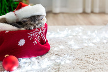 Christmas Cat Wearing Santa Claus Hat Sleeping On Plaid Under Christmas Tree With Blurry Festive Decor. Adorable Little Tabby Kitten Kitty Cat. Cozy Home. Animal Pet Cat. Close Up Copy Space