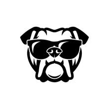English Bulldog Wearing Sungla...