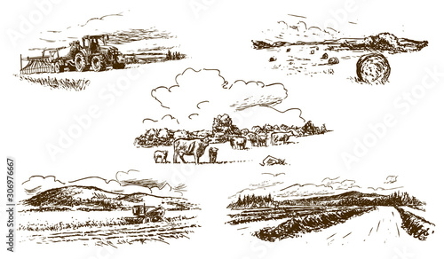 Fototapeta agricultural countryside landscape, set of hand-drawn illustrations (vector) obraz