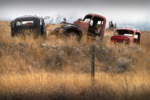 Abandoned Cars Farm Field. Old Abandoned Trucks In The Pacific Northwest.