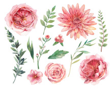 Floral Elements Set. Watercolo...